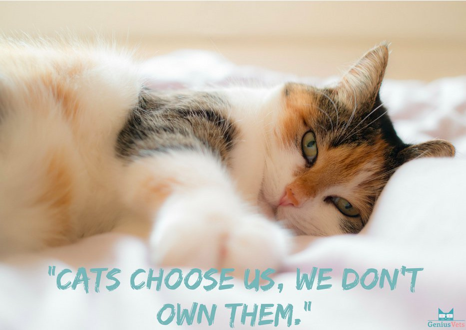 Do you agree? #vieravet #cats https://t.co/z39bY3uxHa