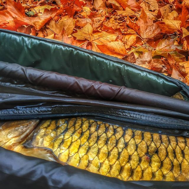 Three shades of autumn #carpfishing #scales #unhookingmat #<b>Totalcarp</b>care #keepemcoming https: