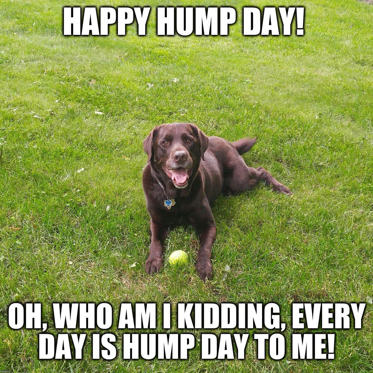 Must be nice! #vieravet #Wednesday #dogslife https://t.co/8BtUOgKJ2t
