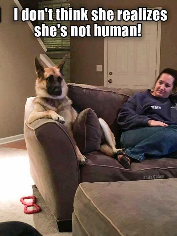 Who else has a dog that thinks they're human?! #vieravet #dogs https://t.co/q6FOyIsf7A
