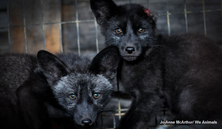 RT @PETAUK: ???? NEVER BE SILENT. ????   Speak up and change the world. https://t.co/skaMNHJ2Gx #FurFreeBritain https://t.co/sZi6r0WWyJ
