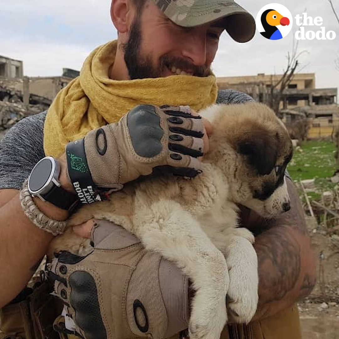 RT @dodo: This soldier fell in love with a puppy in war-torn Syria — here's how he got her home ???? (via @caters_news) https://t.co/jOBfTnjKQj
