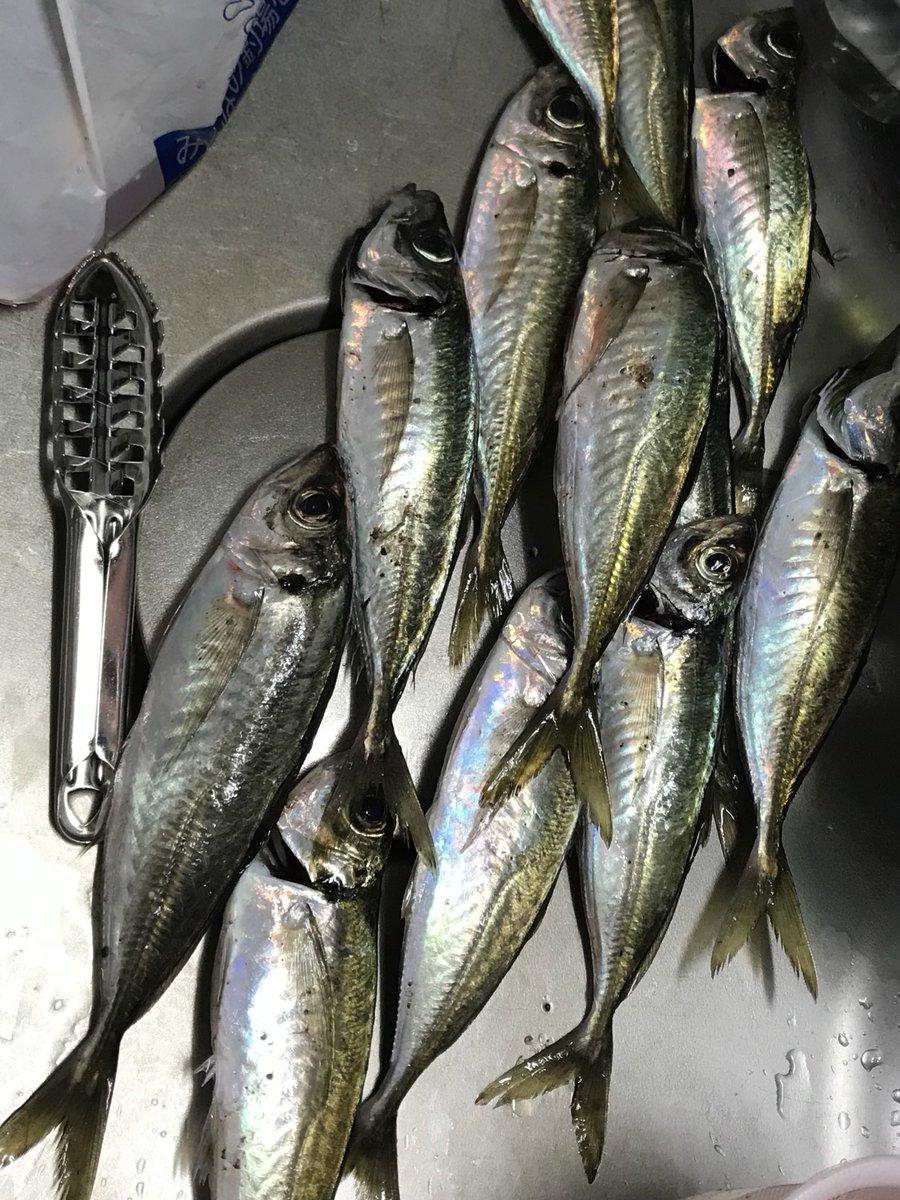 #これを見た人は春夏秋冬の4枚を貼れ 今年の春から釣りを始めて夏秋とキジハタとアオリイカにハマって、アジングしたいけど海に行けない冬、、、シーバス釣りたい!覚えたい! https://t.co/ljJIuznZDM