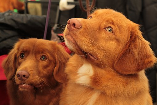 test Twitter Media - Friendly faces waiting for you today and tomorrow from 3-5 pm  Olin Lobby. #stressrelief #therapydogs https://t.co/1S3SdcW6R9