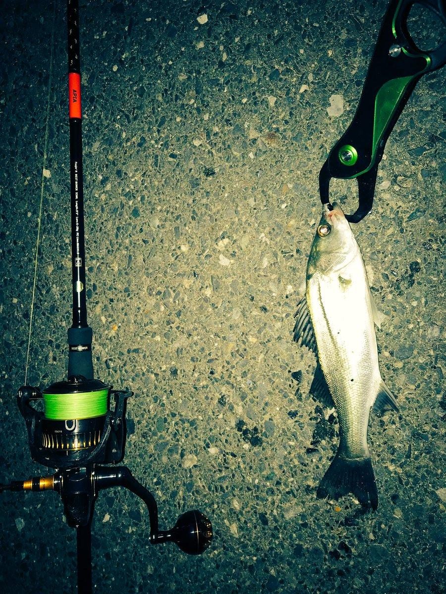 本日の釣果は、、、  セイゴー  フッコー  2キャッチ3バラシw なかなかサイズ出ないなー。。。   #シーバス  #爆風過ぎて釣りにならん https://t.co/GLP3gpCa4q