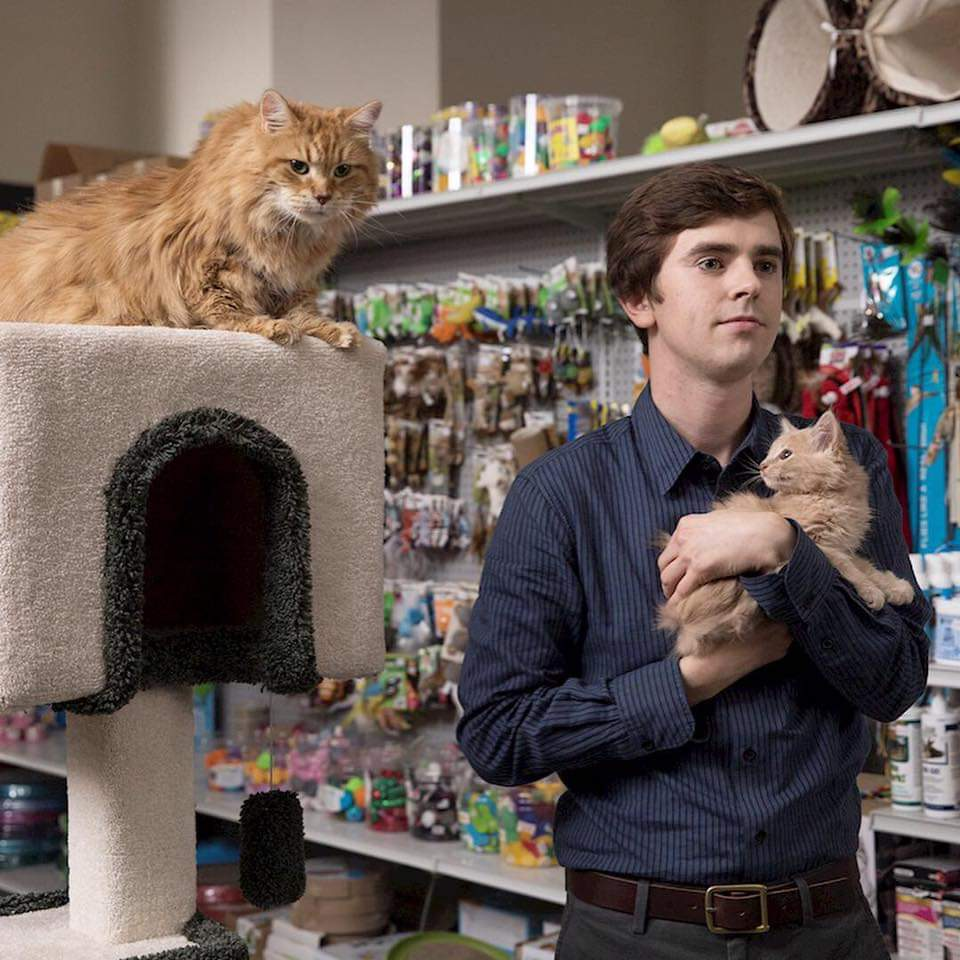 Meow! 😻 #TheGoodDoctor https://t.co/FKQol1rZrg