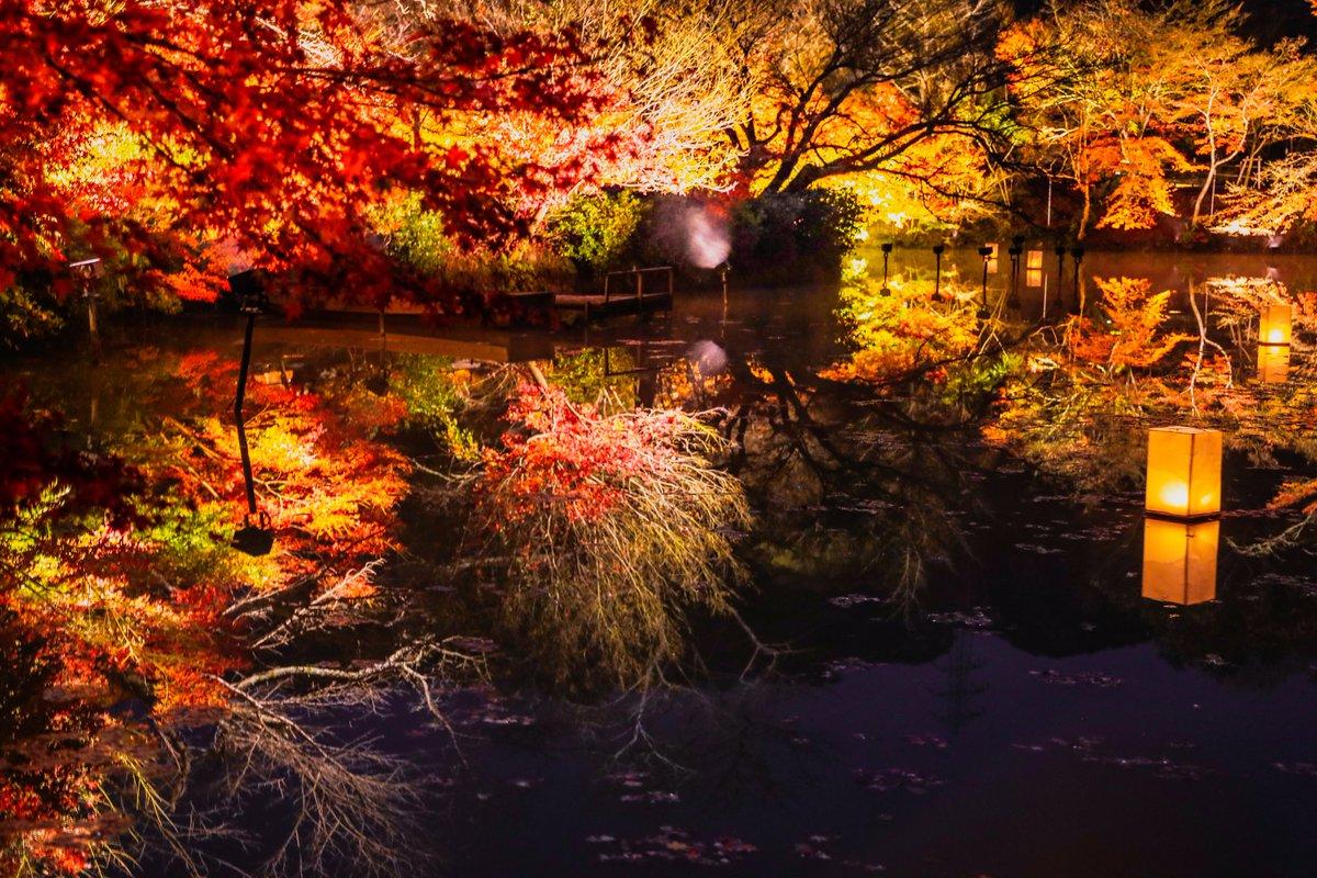 RT @Blue1222Rose: A fantastic world of autumnal leaves  紅葉の幻想的な世界  #カメラ女子 #ファインダー越しの私の世界...