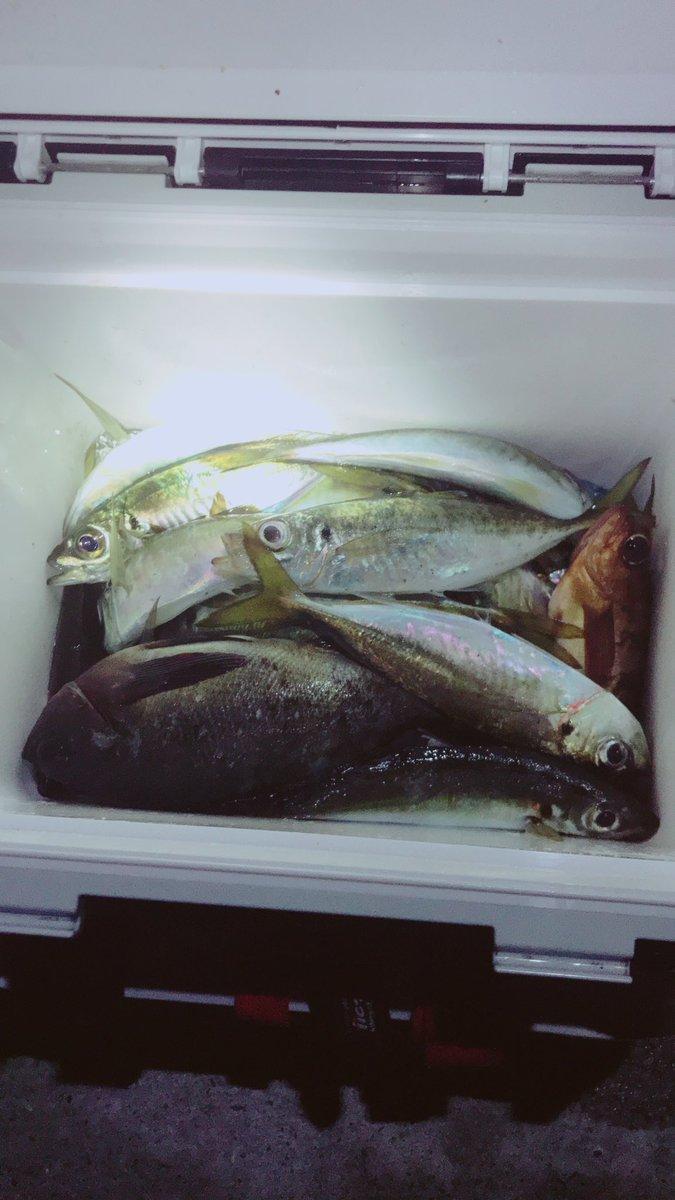 ちょこちょこ魚釣りの釣果をツイートしてみよう(о´∀`о) 山口県のアジの聖地でのアジングは裏切らない❗️ https://t.co/pbzyqzwBEQ