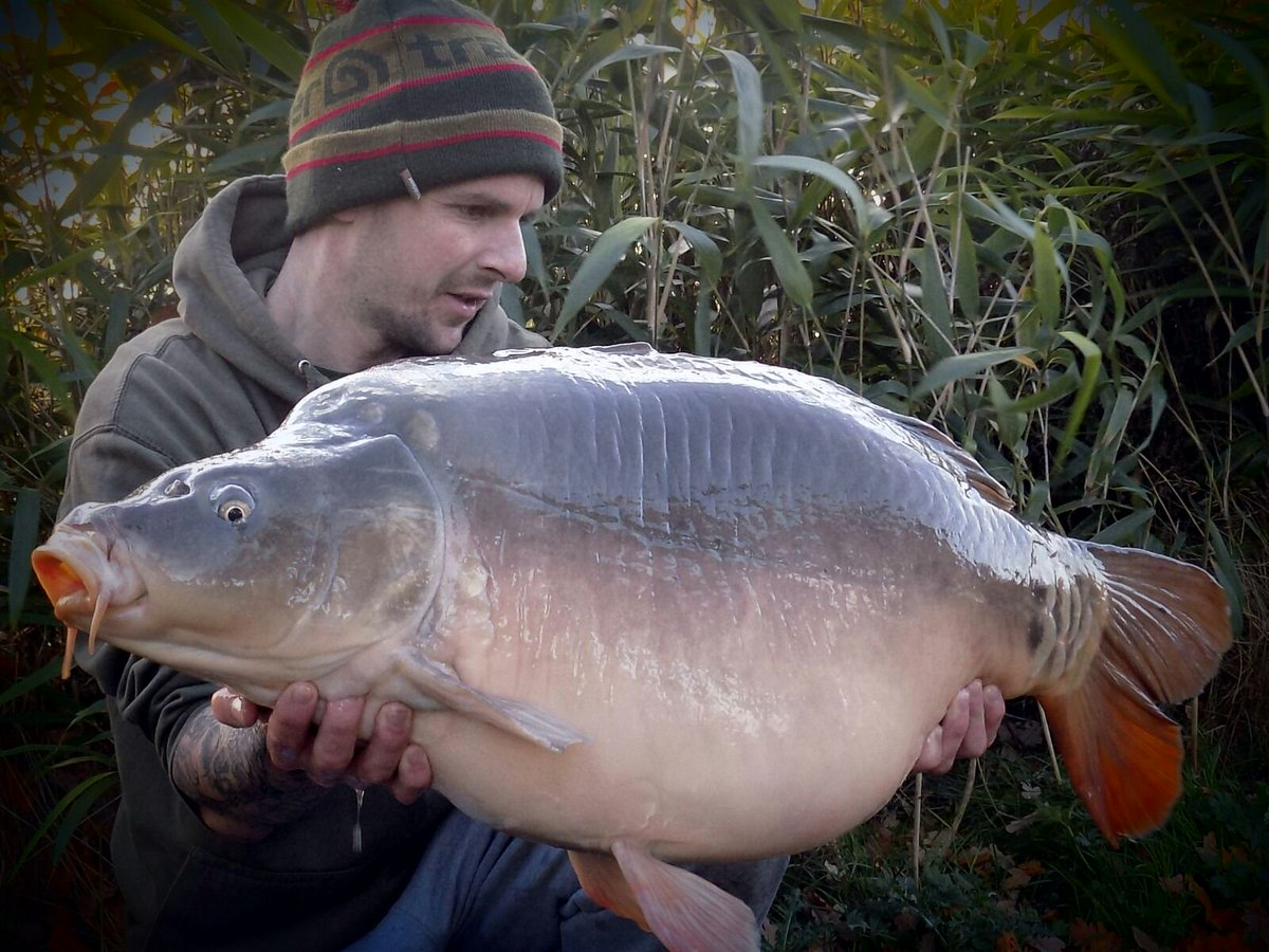 #Tbt to my pb. 32lb 8oz of belter <b>Mirror Carp</b>  #carpy #carpfishing #karpe https://t.co/zEFaK8