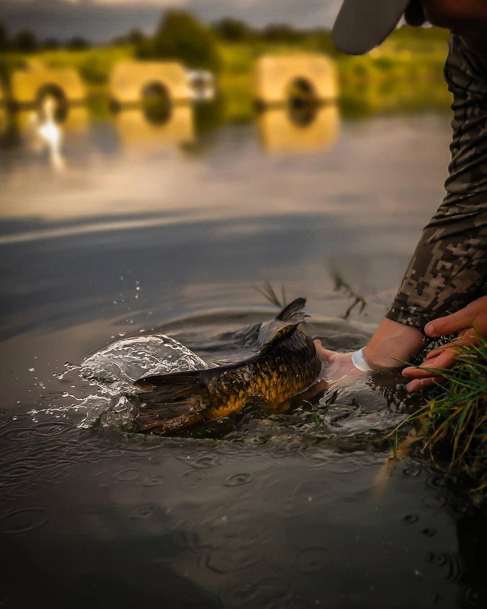 The release. #vass #fishing #<b>Vasswaders</b> #carpfishing https://t.co/umeRNZRHdc