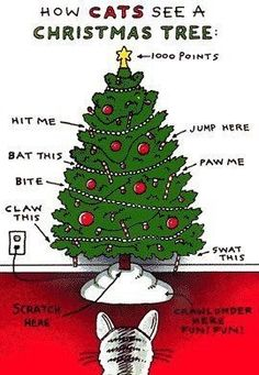 Too true! Make sure to safeguard your tree from your adventurous kitty! #vieravet #kitty #holidays https://t.co/g6UAuuZIKP