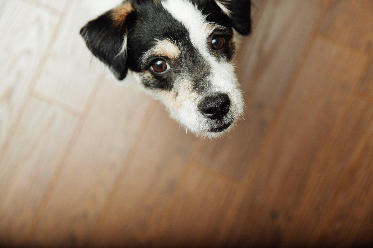 test Twitter Media - Hello! #dogfriends https://t.co/SIWGAIEN9N