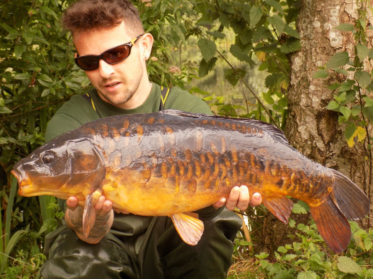 #Tbt to this bad boy of a carp.      Still the prettiest fish ever bagged.  Twice. #<b>Carpy</b> #ca