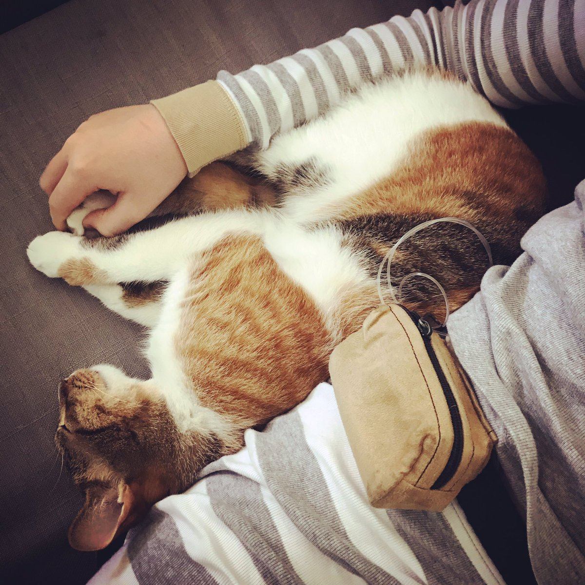test Twitter Media - Day 2 of flu and the cat continues to care for her Type1 human. Anyone out there with pets who give you extra love when you are feeling under the weather? #type1diabetes #sickdays #lagata #thingscatsdo #type1 #insulinpump #pumpinginsulin https://t.co/g9a0NmrXJI