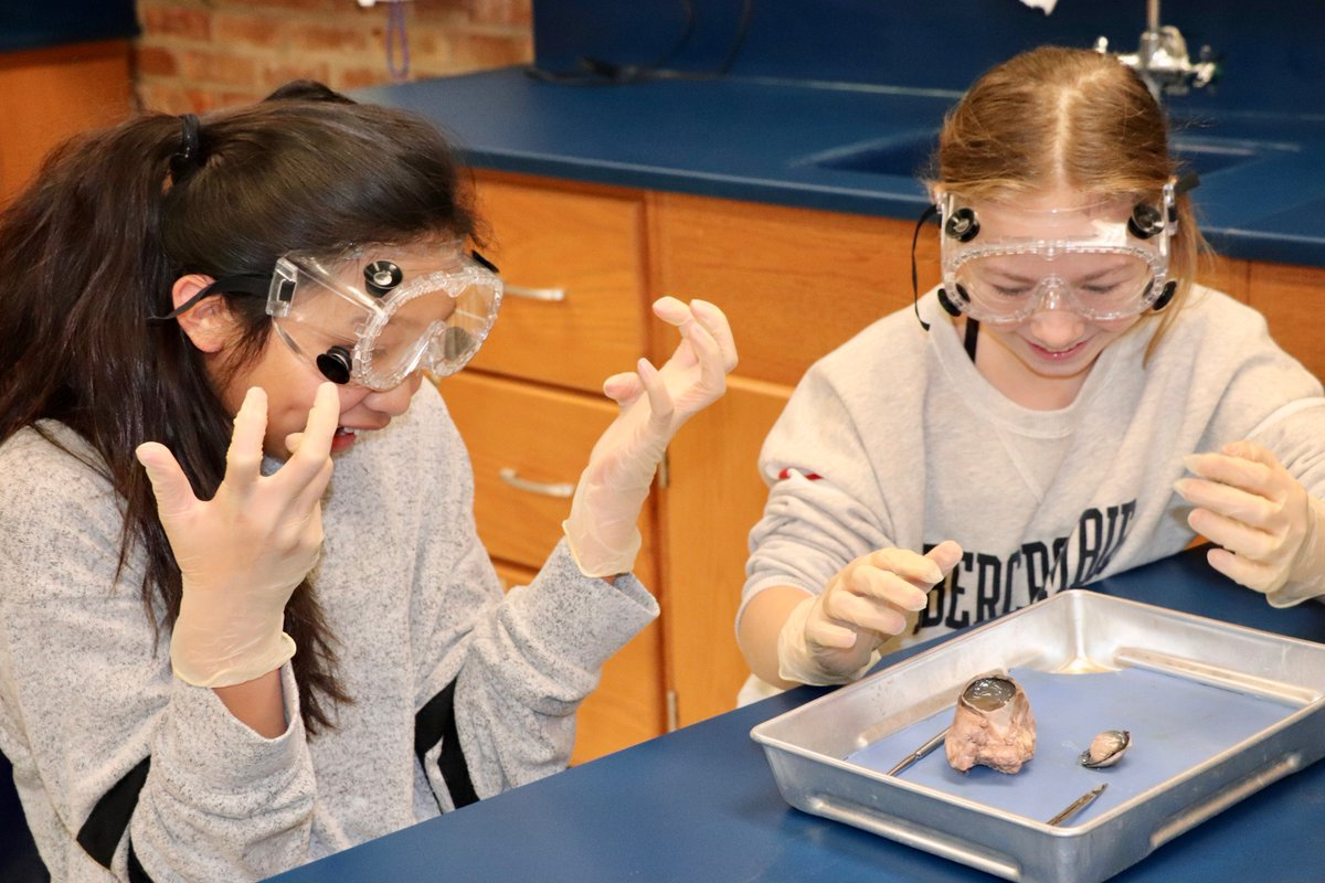 "test Twitter Media - Maple School 6th graders eye dissection with scientific curiosity! ""I see some future surgeons in this room,"" said 6th gr. science teacher L. Kurtz, as she addressed students, who were participating in a bovine eyeball dissection lab. #d30learns https://t.co/wjOdD423uE https://t.co/LoE0nH5jvw"