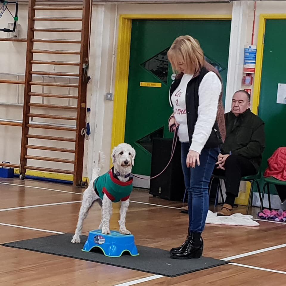 test Twitter Media - Well done Daisy for winning 'Musical paws on' @willowsvets @Myhappydoguk https://t.co/2w4zfZMs5F