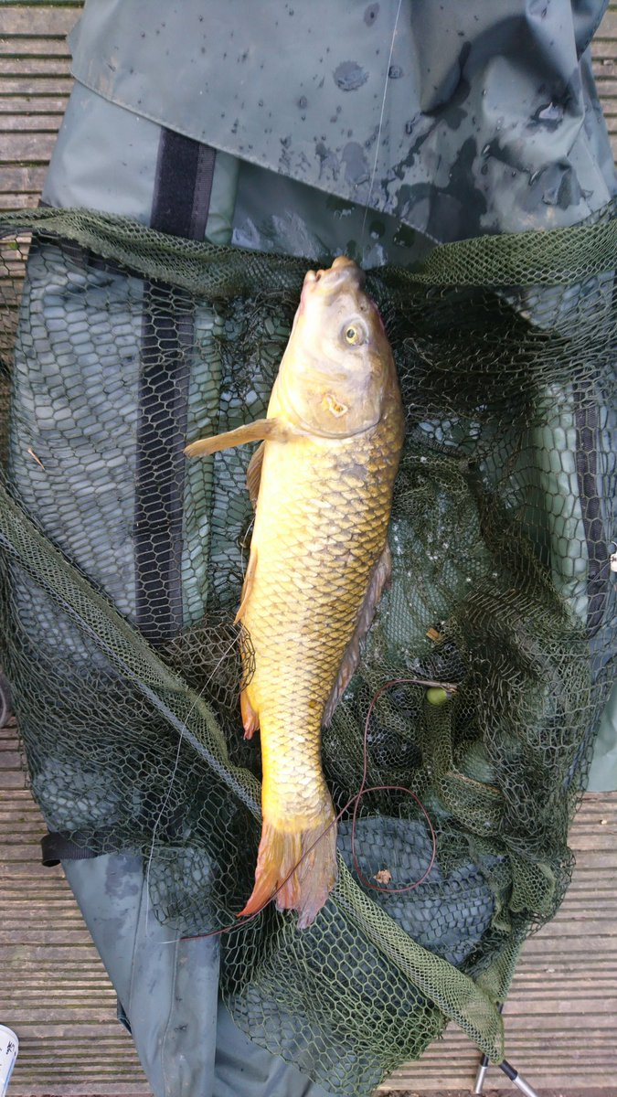First fish of the year, a prehistoric wildie, no monster but very welcome #carpfishing #wildcarp #<b