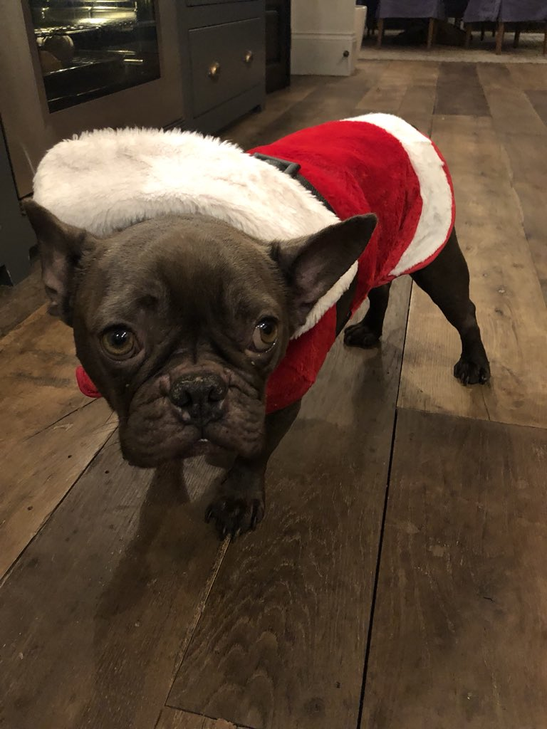 Apprentice Santa. #NelsonAnderson #merrychristmas #frenchbulldog https://t.co/Q1ZChU9wHw
