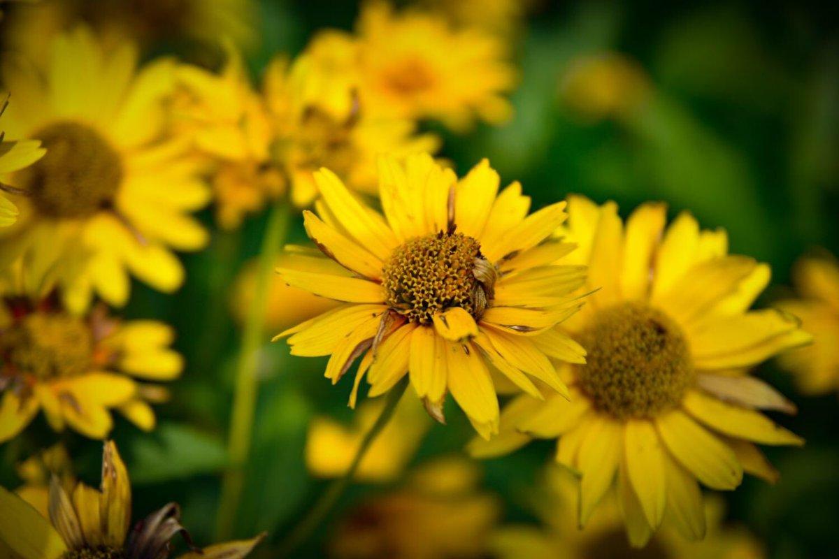 RT @PicBallot: Beautiful flowers captured by PicBallot member Jenny816  #yellow #flowers #nature #naturephotography https://t.co/hnwZ9RfSdc