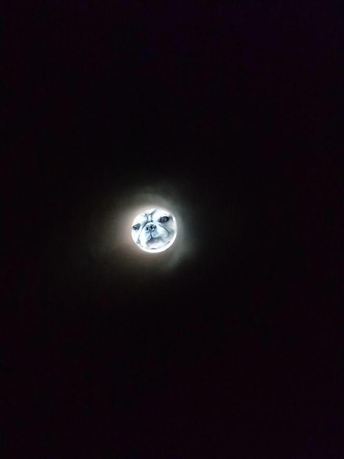 RT @netgeekAnimal: トイレットペーパー越しに撮ると月になるよ https://t.co/WbNWZ4sYSi