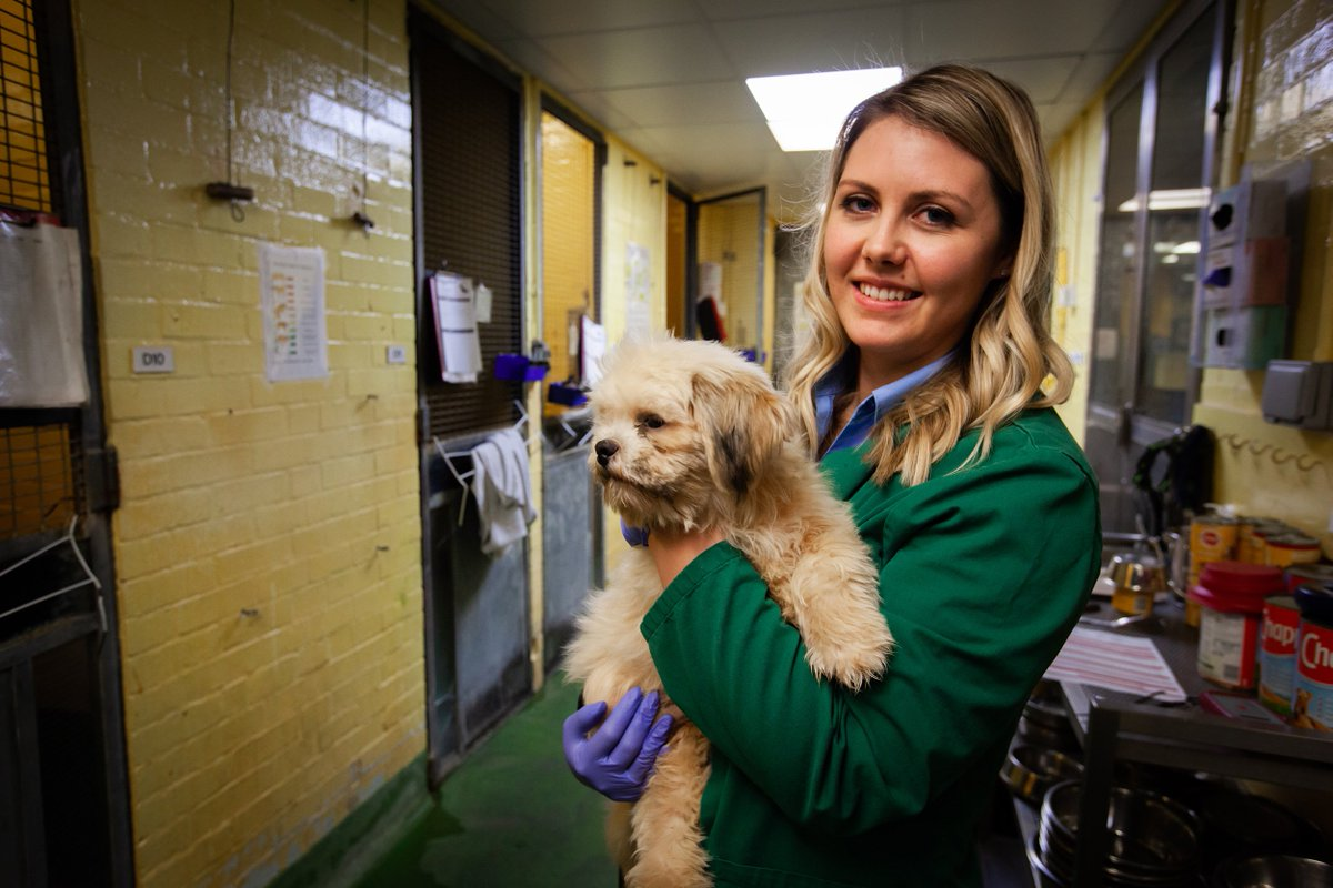 #AnimalAirport departs at 9PM on #More4 #tonight featuring asthmatic cats, 300 creepy crawlies and a rescued street dog, Bruno, from Thailand. Tune in tonight for the final leg of #BrunosStory with @ImogenWeekender #newseries #outnow @HARC_COL @4Viewers https://t.co/3ipUb4R6Pi