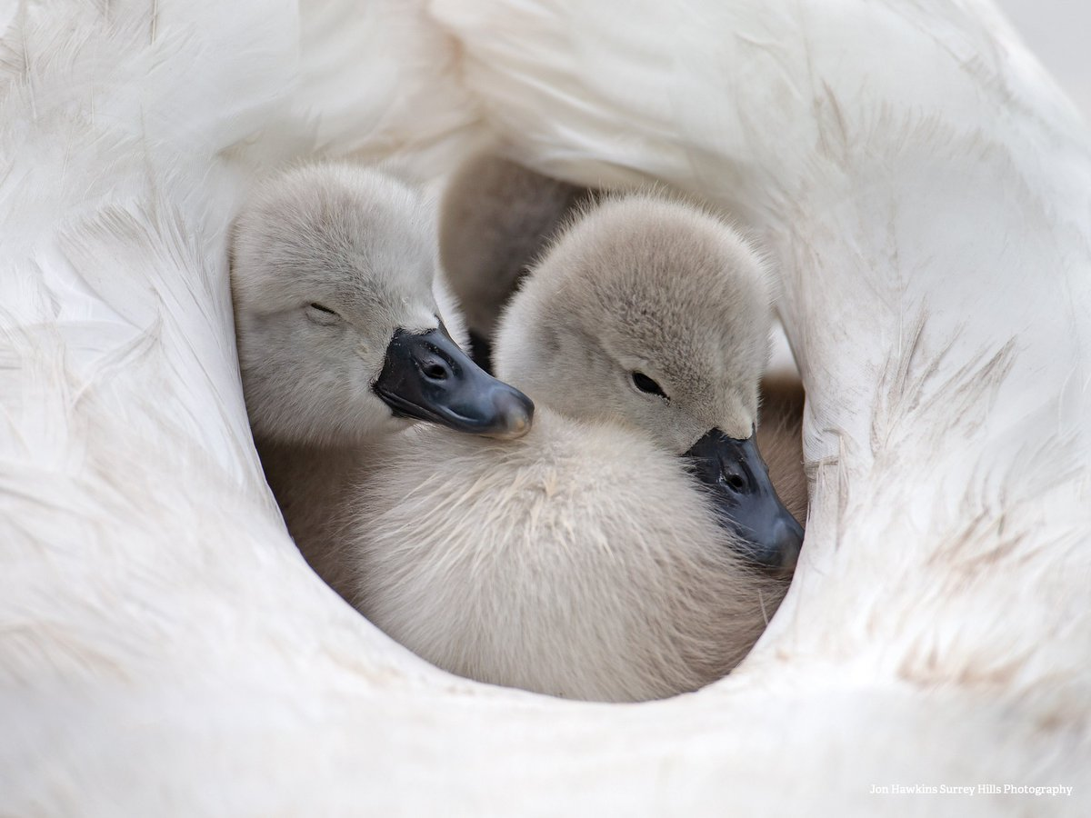 RT @WildlifeTrusts: When your main plan for the weekend is to stay cosy 😊 #FridayFeeling https://t.co/9TWDZFuPUJ