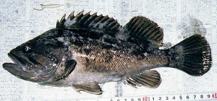 東北の海はクロソイ、カレイ、ドンコの釣果が好調なんですかね? 福島、宮城くらいしか行けないけど https://t.co/8MCcxMjTo8