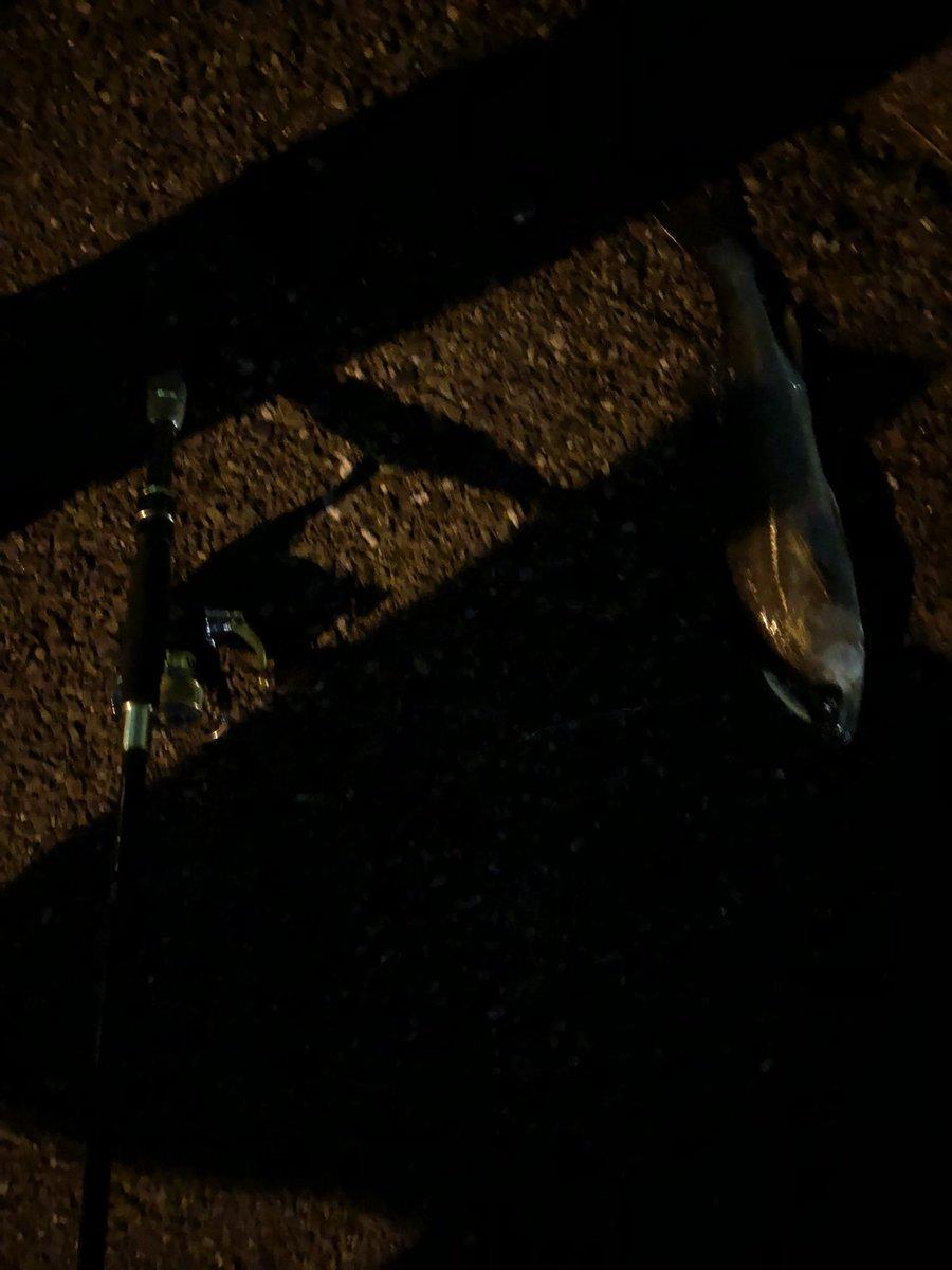 横浜出張後、根岸港へ。ライトタックルでアジやメバルを狙うも、30〜40㌢のシーバスが釣れた。タモが無いからぶっこ抜いたけど、竿折れなくてよかった。ヘッドライトも無くて準備不足のため、納竿。 https://t.co/NxFQiyVhdk