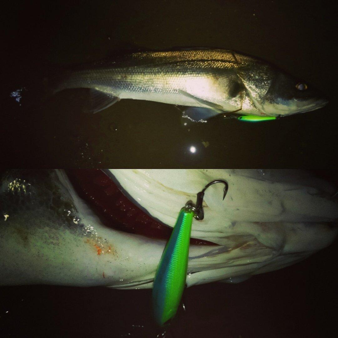 やはり!初釣りはこの魚!! #シーバス #スズキ #鱸 #がまかつ #ラグゼ #ティガロ #スパット #ツインrbmシルバーリミテッド #ツインspmh https://t.co/6sOOL3Dmj0