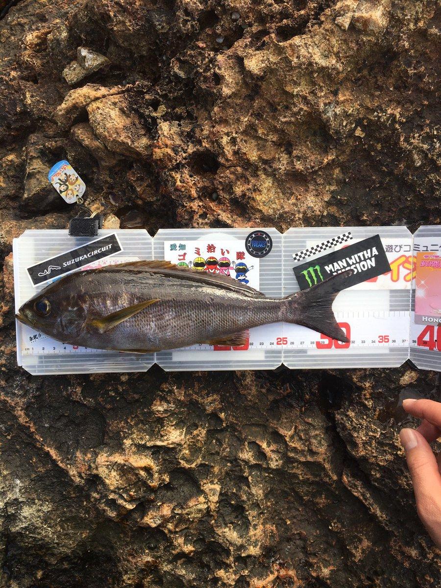 3日4日連続で伊豆の神子元島にて初釣り ムロアジ、グレ、ブダイ、サンノジ、タカベ、イサキ、ベラ、タカノハダイの釣果 磯釣りデビュー戦でした 釣れる魚みんな引きが強くて最高でした https://t.co/7KPidItk0t
