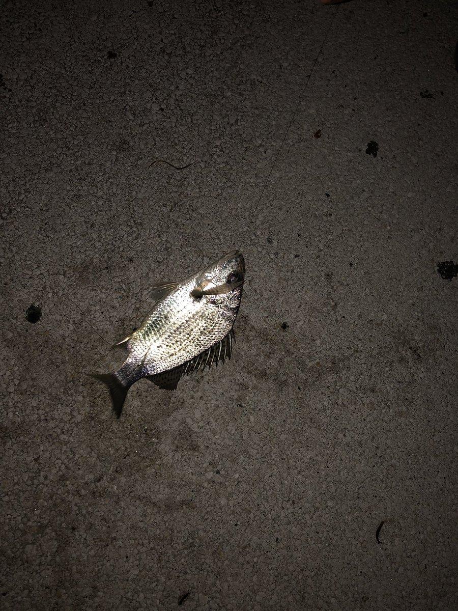 Gtのタケヤと釣りing(・`◡︎´・)と言っても俺は釣りはしないので横でビール飲みながらお菓子を食べている。しかしまぁいい時間やのうぅ何も考えずに海を見つめるってのも。寒いけどね。本日1本目のちゃいちーサカナ。 https://t.co/I7FDF1FA3Z