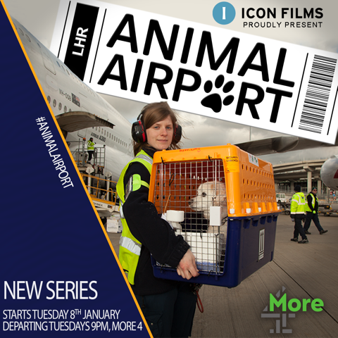 Animal Airport premiered last night, with music by our fantastic composer @mainwaringrich. Made by Accorder clients @iconbristol, catch up is available on the @Channel4 website here: https://t.co/taPNc8Hv7l 🐶🐱🐰🐹🐻🐸✈️💚💙💜❤️ https://t.co/ZVcdvB1hZf