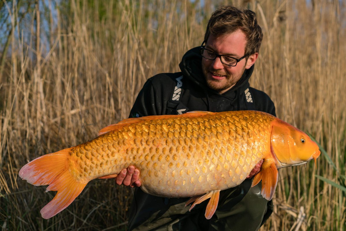 Max Hendry with a near-30 Koi that couldn't resist a Citruz hook-bait �<b>🎣</b>🔥 #nashbait