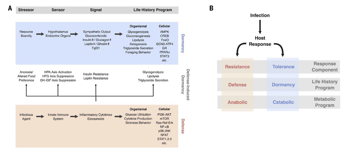 test Twitter Media - We would do well to understand our life history of immunity, inflammation and metabolism. This @sciencemagazine review of immunometabolism by @RMedzhitov and colleagues @YaleMed may help towards a better approach to #diabetes, #obesity, #sepsis + https://t.co/TzzhGSHuAx https://t.co/hujf56n4Bl