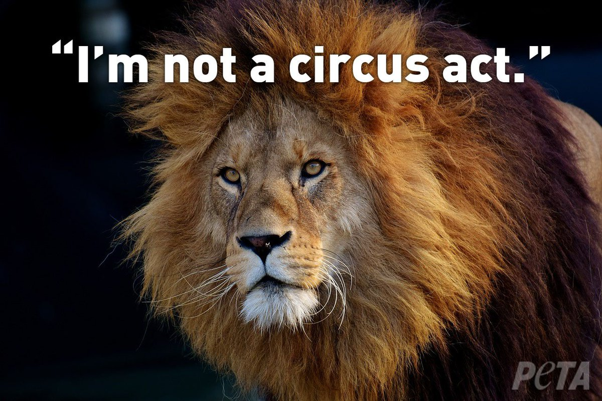 RT @peta2: Animals are individuals — NOT entertainment. #BoycottAnimalCircuses https://t.co/Cp8GoWWbYS