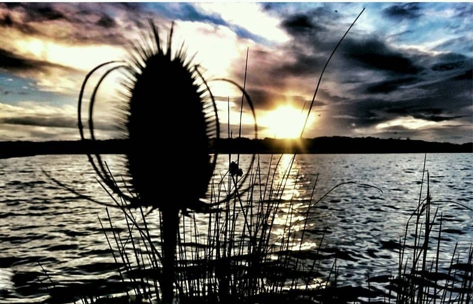 Big clay pit, moody sky and a teasel top  #carpfishing #carpy #water #<b>Outdoors</b> #sky https://t