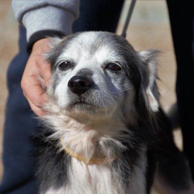 Curro sucht dringend Paten!💕🐾😍  https://t.co/7tO9GK5Ykx  #patengesucht #patenfuerhunde #dogsoftwitter #AdoptDontShop https://t.co/60kpGIcJv1