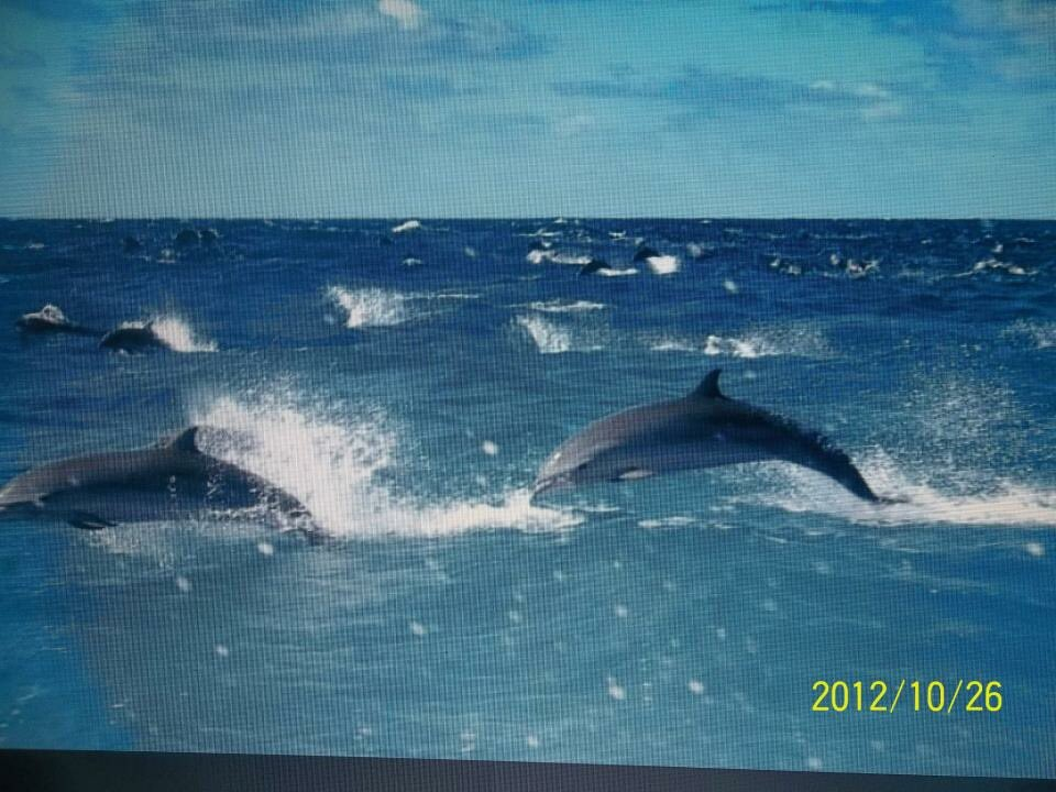 Stampeding dolphins off the north coast of #Timor-Leste back in 2012 or so.