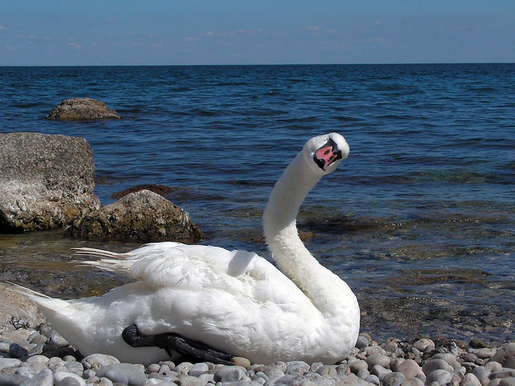 RT @PMSimferopol: Crimean swan wishes you a great day🌞🦢🌊  #Crimea #Russia #Крым #Россия https://t.co/RlxcOxVGKr