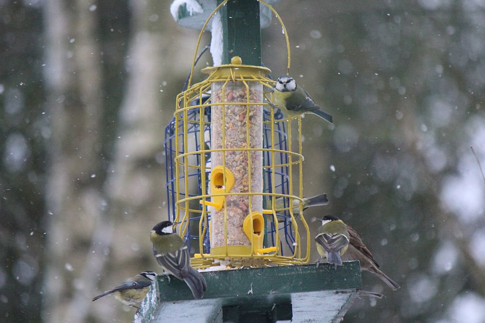 Image for The white blanket of snow does make the place look rather pretty and gives the locals a real appetite! #SnowDay #birds #FridayFeeling #Powys #MidWales #FindYourEpic https://t.co/FnwIuT5EAA