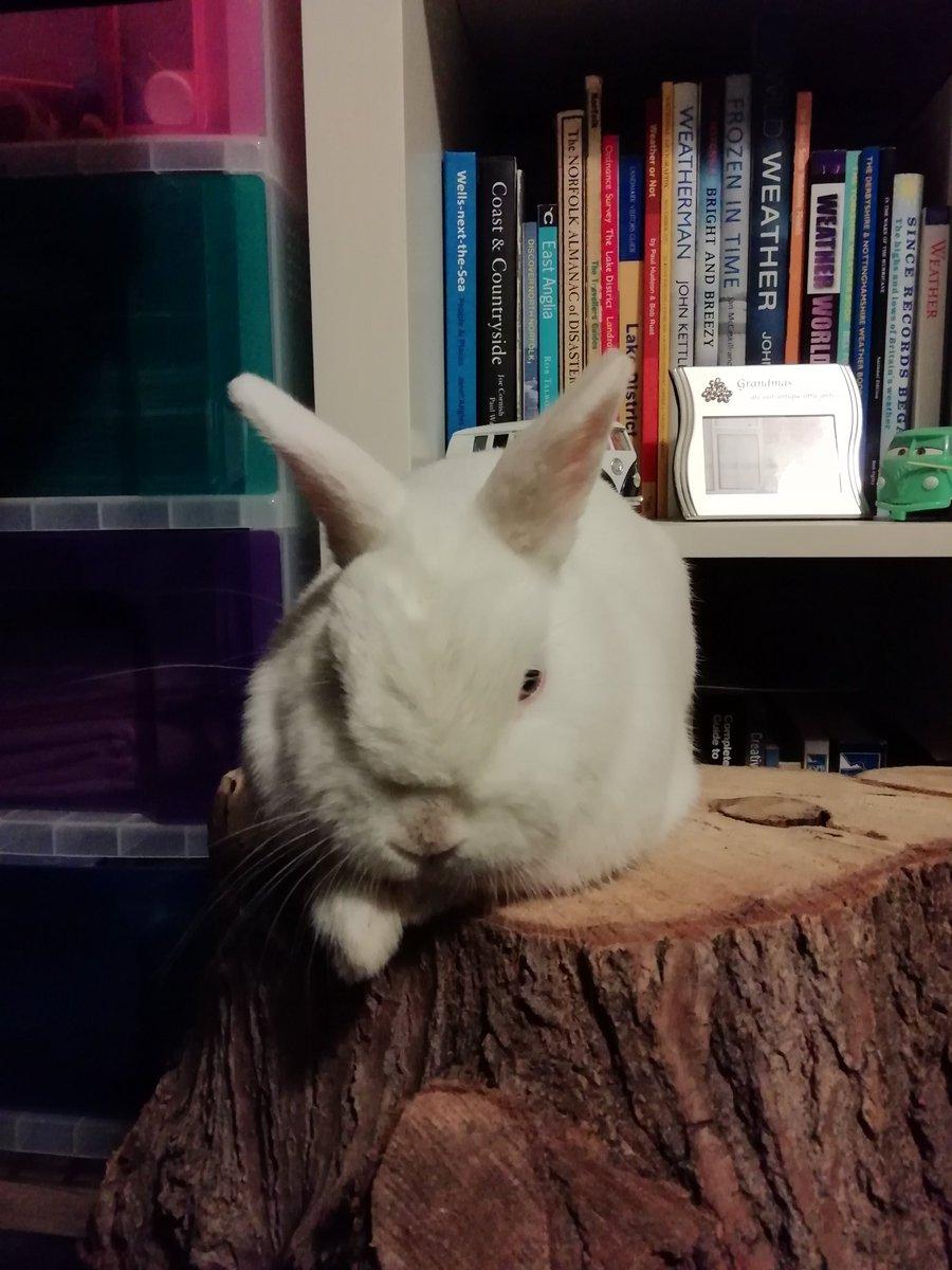 RT @RabbitNeil: Just casually chilling on my stump #neiltherabbit https://t.co/sytG7JgoNt