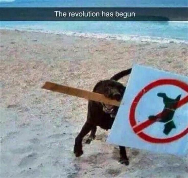 RT @LabradorRocky: Mama finded dis funny picture. Viva la revolution!  #dogsoftwitter https://t.co/cxrW7XKqqv