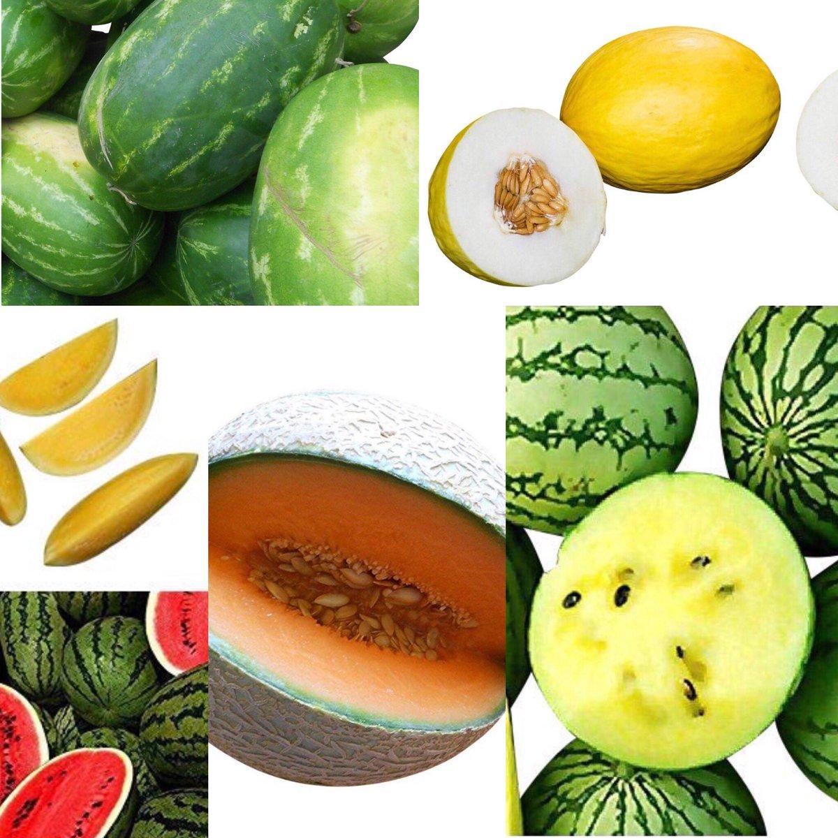 Melone Seeds #melone #melon #giant #seeds #samenchilishop #gardening #GardenersWorld #gardeningtips #gardens https://t.co/3NoDRDcF12