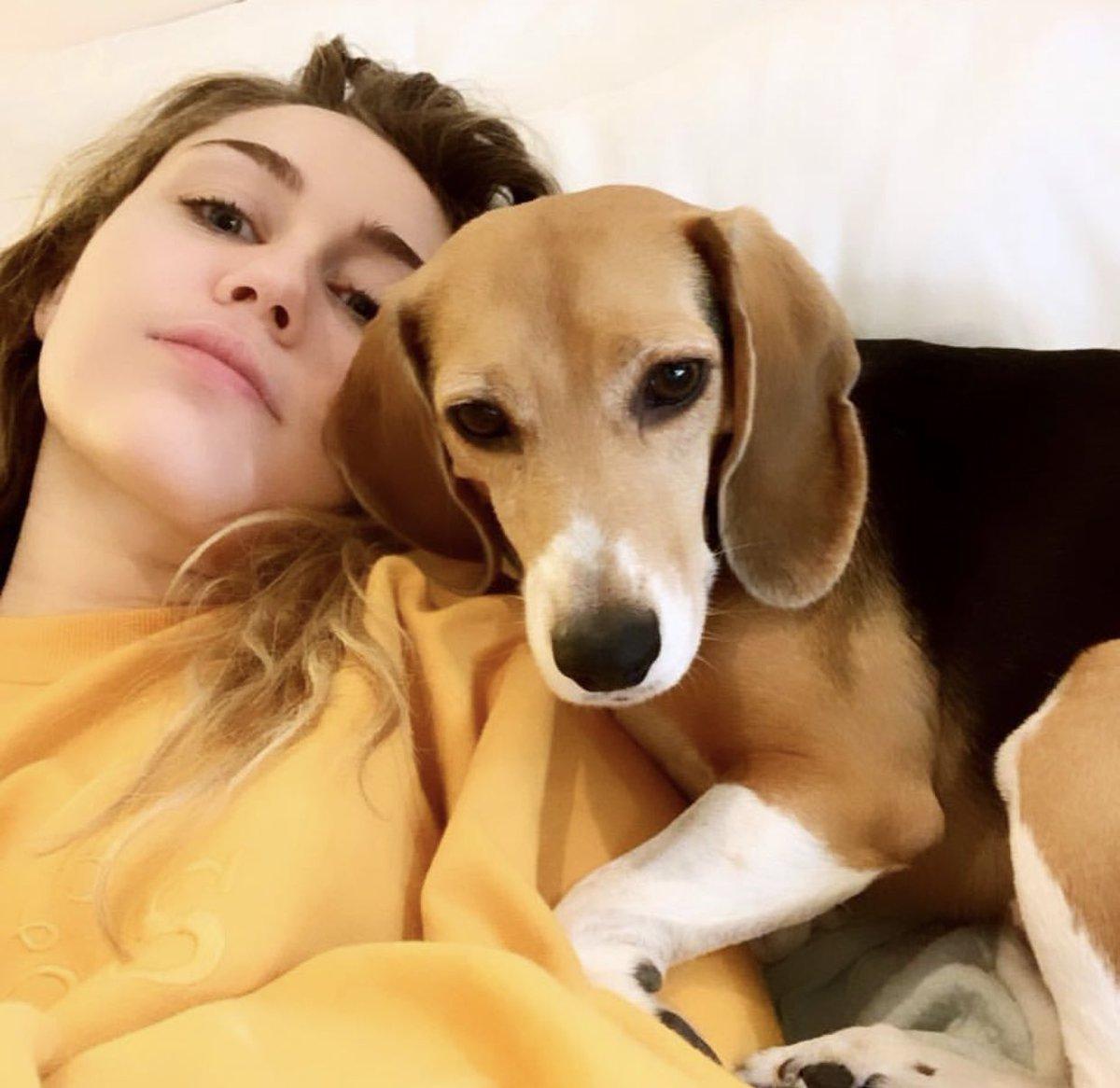 Lazyyyy Dazzzze w Little Dog ???????????? https://t.co/B4kFoercLR