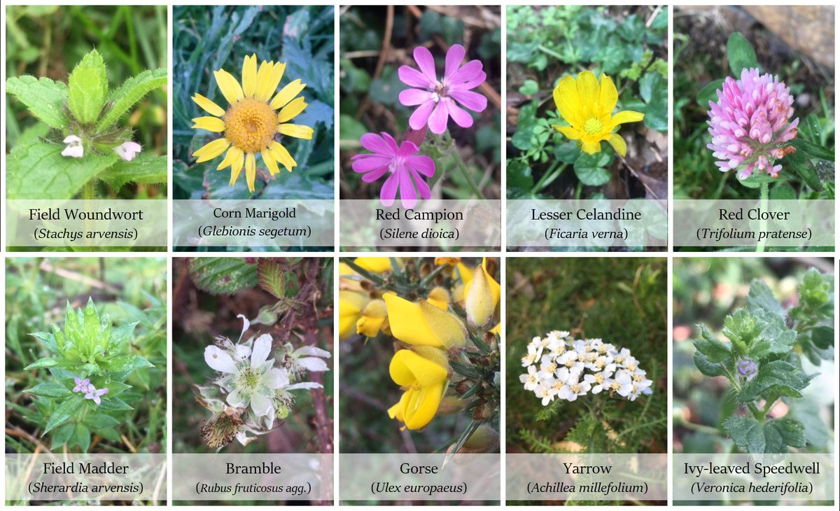 test Twitter Media - RT @bumble_being: Flowering finds for this week's #thewinter10! 🌸  #wildflowerhour https://t.co/m1U9ReaB8Y