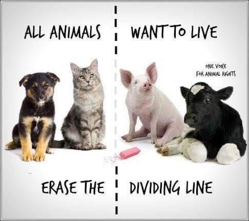 RT @IngridHbn: #veganshoudenvandieren #boerenhoudenvandieren welke hashtag houdt het meest steek? #veganuary 🌱🕊 https://t.co/rgnoKAUIaT