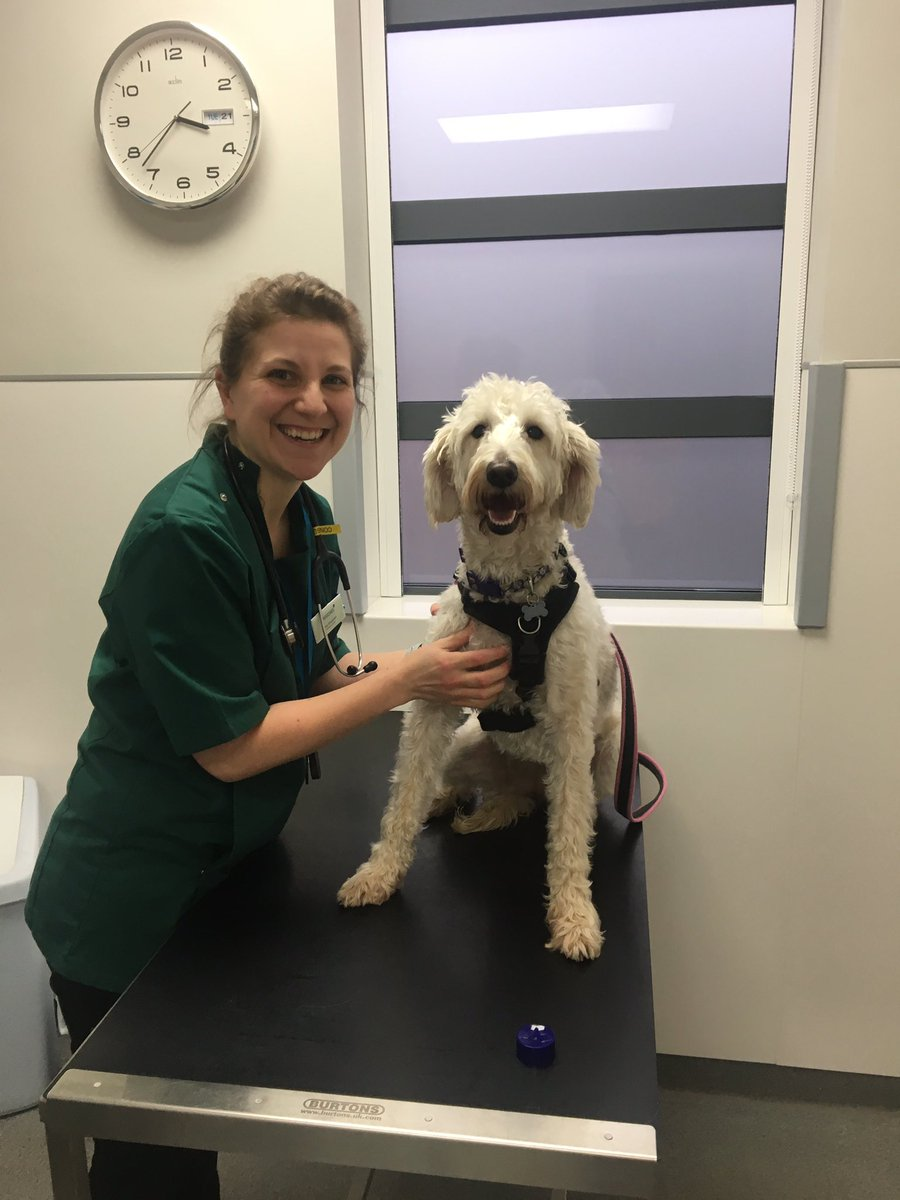 test Twitter Media - A very brave Daisy who had to see our vet Amy about some 'itching'. Everything is ok now. Thanks @willowsvets @Myhappydoguk https://t.co/1j8DhcLLut