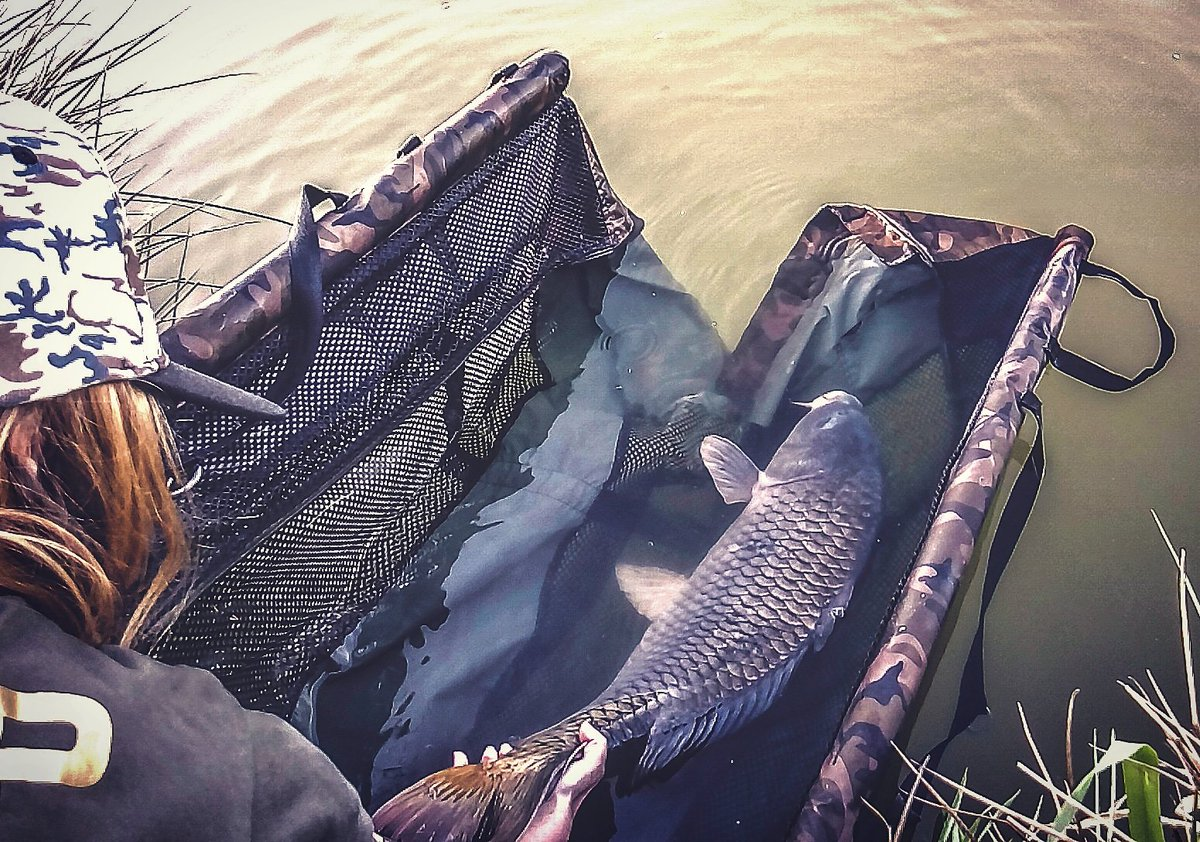 #tbt2018 #Carpfishing #fishing #CatchandRelease #carp #karpfenangeln #carpy #fishingforlife https://