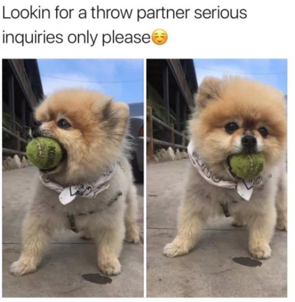 Online play-dating? :) #vieravet #matchmaker https://t.co/n3lR8kqOdv
