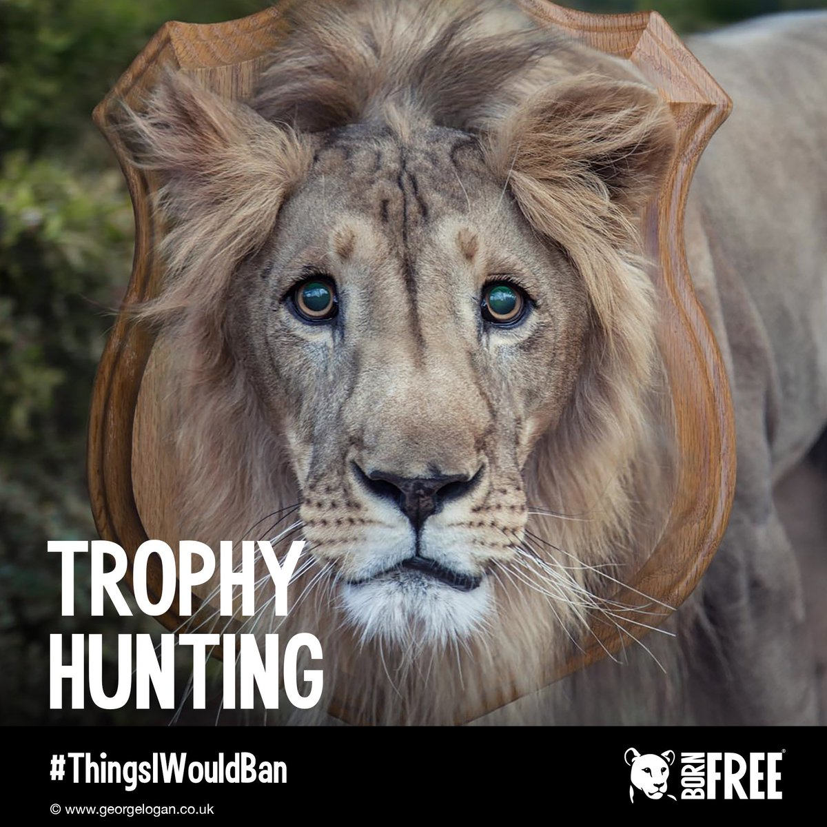 RT @BornFreeFDN: #ThingsIWouldBan: Trophy Hunting! RT if you agree ???????????????????? https://t.co/zRdI8zkNP7